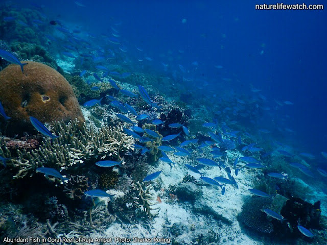 Diving photograph from Raja Ampat