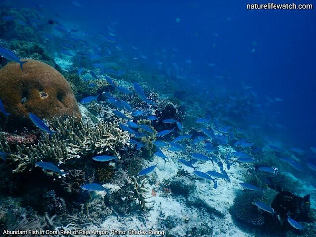 Scuba diving photo in Raja Ampay