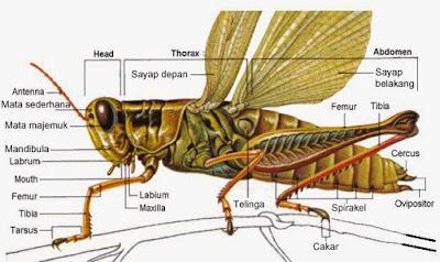 Karakteristik Umum Arthropoda
