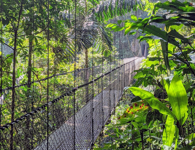 Costa Rica Itinerary: Hanging bridge at Monteverde Cloud Forest Reserve