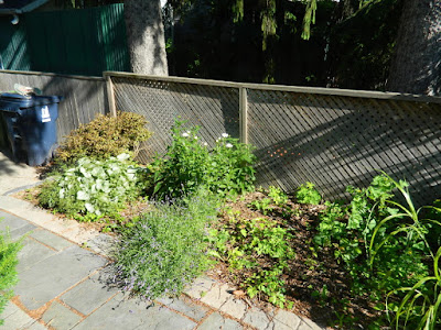 Oakwood Village Toronto backyard garden makeover before Paul Jung Gardening Services
