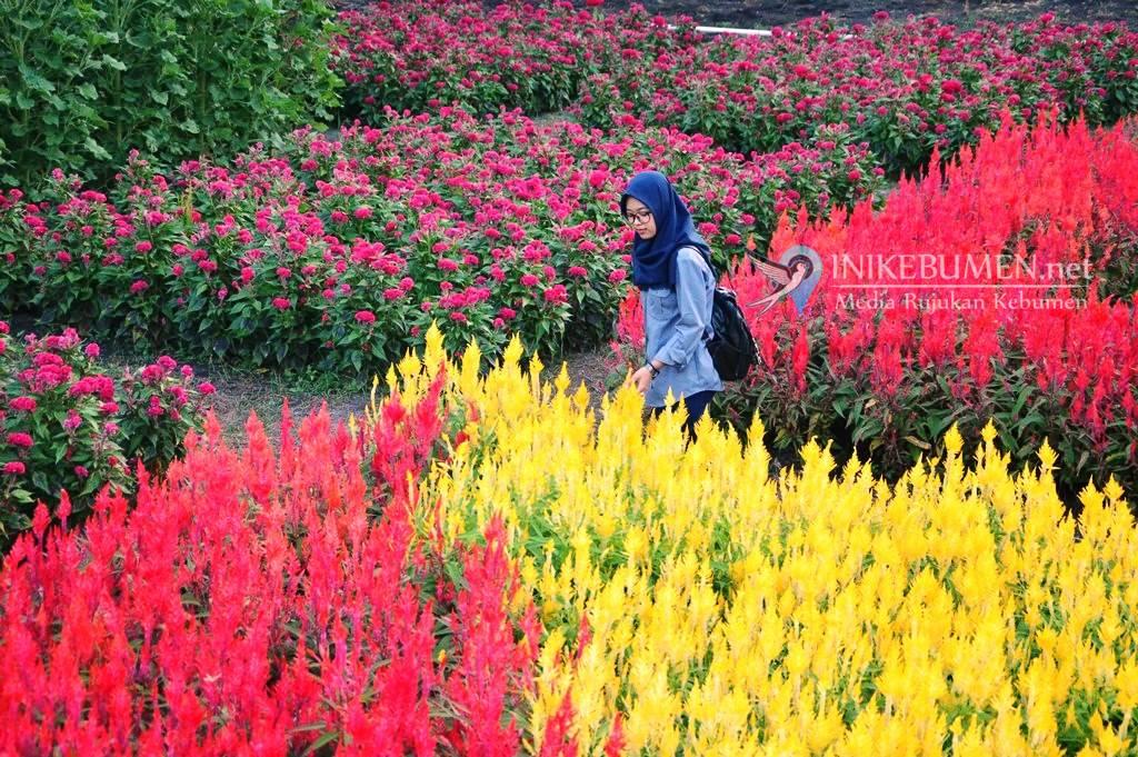 Tawarkan Hamparan Bunga Matahari, Taman Bunga Laguna Bisa Jadi Alternatif Liburan Saat Lebaran