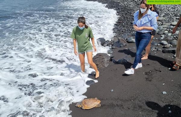 El Cabildo de La Palma libera un ejemplar de tortuga boba rehabilitada en el Centro de Fauna Silvestre