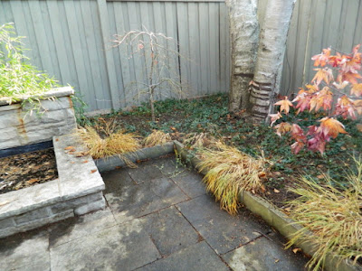 Toronto Cabbagetown Backyard Fall Cleanup After by Paul Jung Gardening Services--a Toronto Organic Gardener