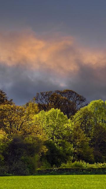Twilight Wallpaper Clouds, Trees, Field, HD Landscape