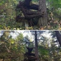 रहस्यमई पेड़ों के बारे में बताएं  Interesting Facts About The plants In Hindi