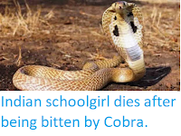 https://sciencythoughts.blogspot.com/2019/09/indian-schoolgirl-dies-after-being.html