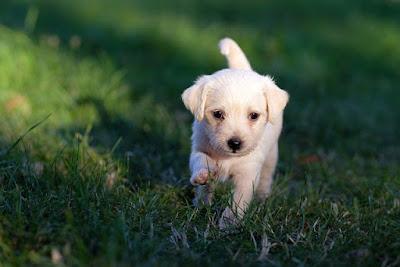 Liten hund i gräs