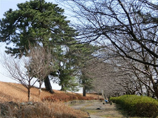 松苗植栽地跡