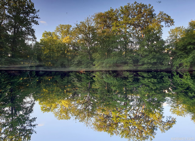 Árboles reflejados en lago