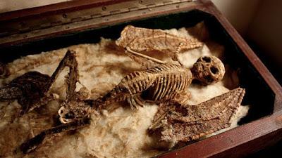 esqueletos-de-seres-desconhecido-encontrado