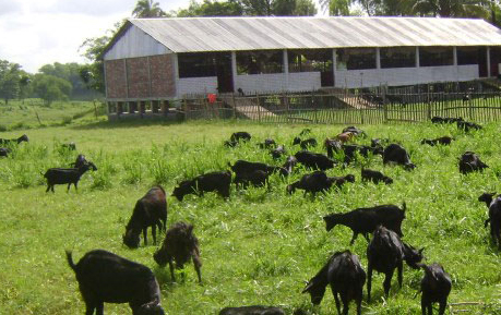 What To Feed Goats Modern Farming Methods
