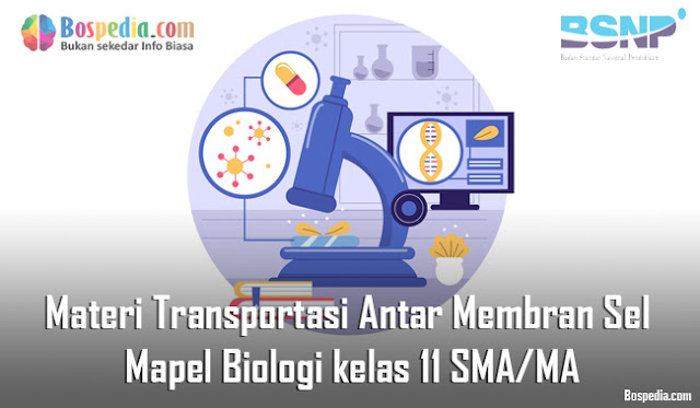 Materi Transportasi Antar Membran Sel Mapel Biologi kelas 11 SMA/MA