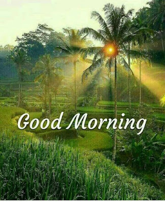 good morning nature hd images