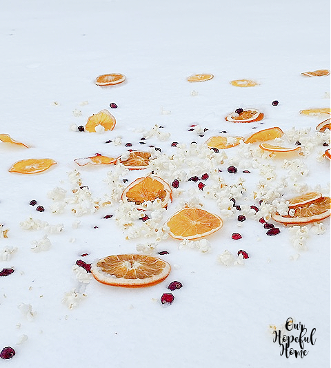 bird feed snowy field fruit berries