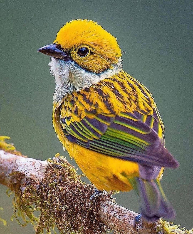 Birds DP