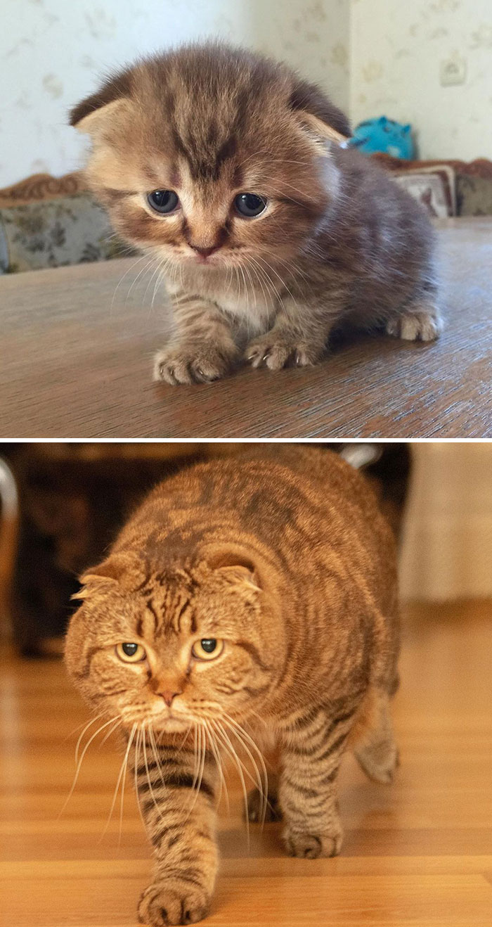 Before & After Pics Of Kitten Growing Up