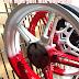 Sơn mâm xe Exciter150 phối màu trắng đỏ thể thao cực đẹp