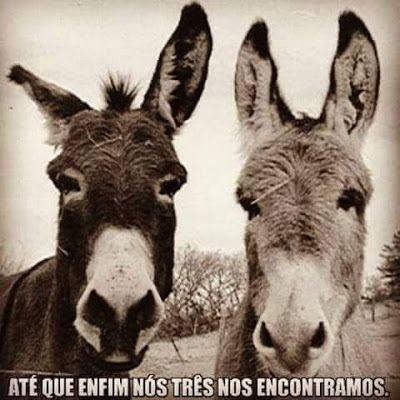 credo, memes, humor, memes engraçados, memes brasileiros, melhor site de memes, site de piada, melhores memes, fotos engraçadas, burros, imagem engraçado, imagem memes