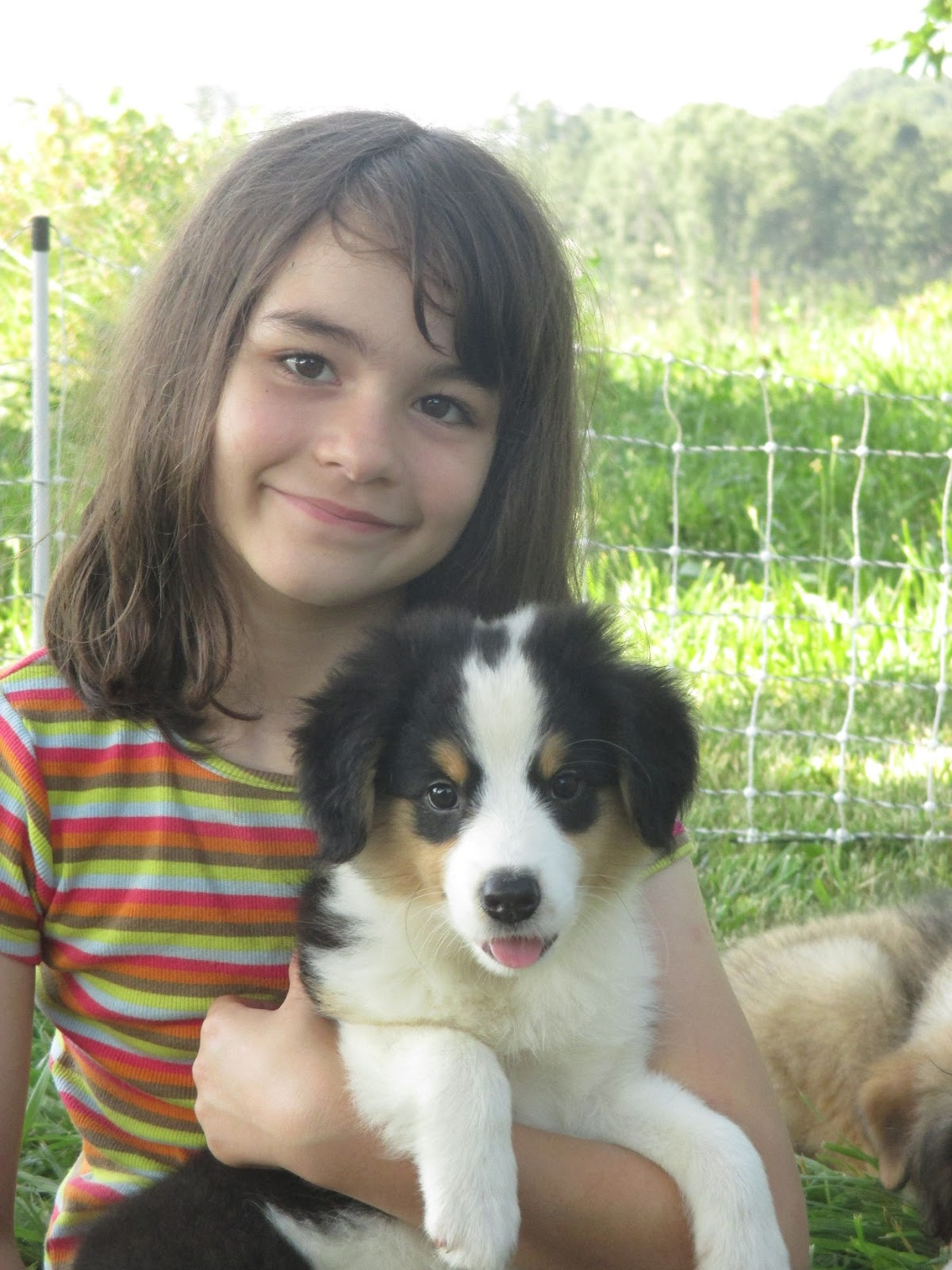 Life On The Farm English Shepherd Puppies For Sale