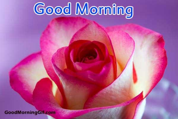 good morning hd gif