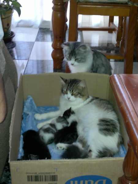 calostro-gatos-amamantar-leche-alimentacion