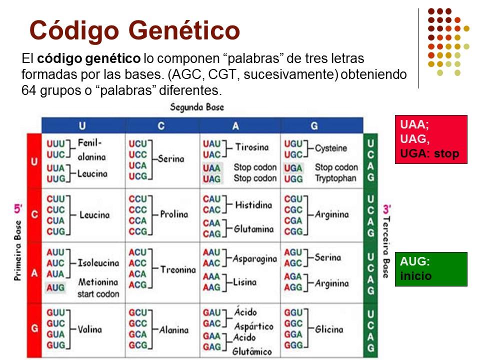 biolog u00eda grado noveno  diapositivas c u00d3digo gen u00c9tico y