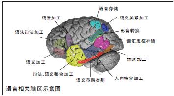 语言相关脑区示意图