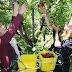 Καλλιεργήστε τουρίστες…στο χωράφι σας! Άρθρο του Διευθυντή του ΙΕΚ ΑΡΙΔΑΙΑΣ Γεώργιου Γιόρτσου