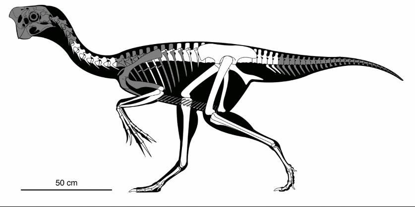 Egy olyan dinoszaurusz maradványait fedezték fel, amely még rajta ült a ki  nem kelt tojásokon | Új Világtudat | Az Élet Más Szemmel