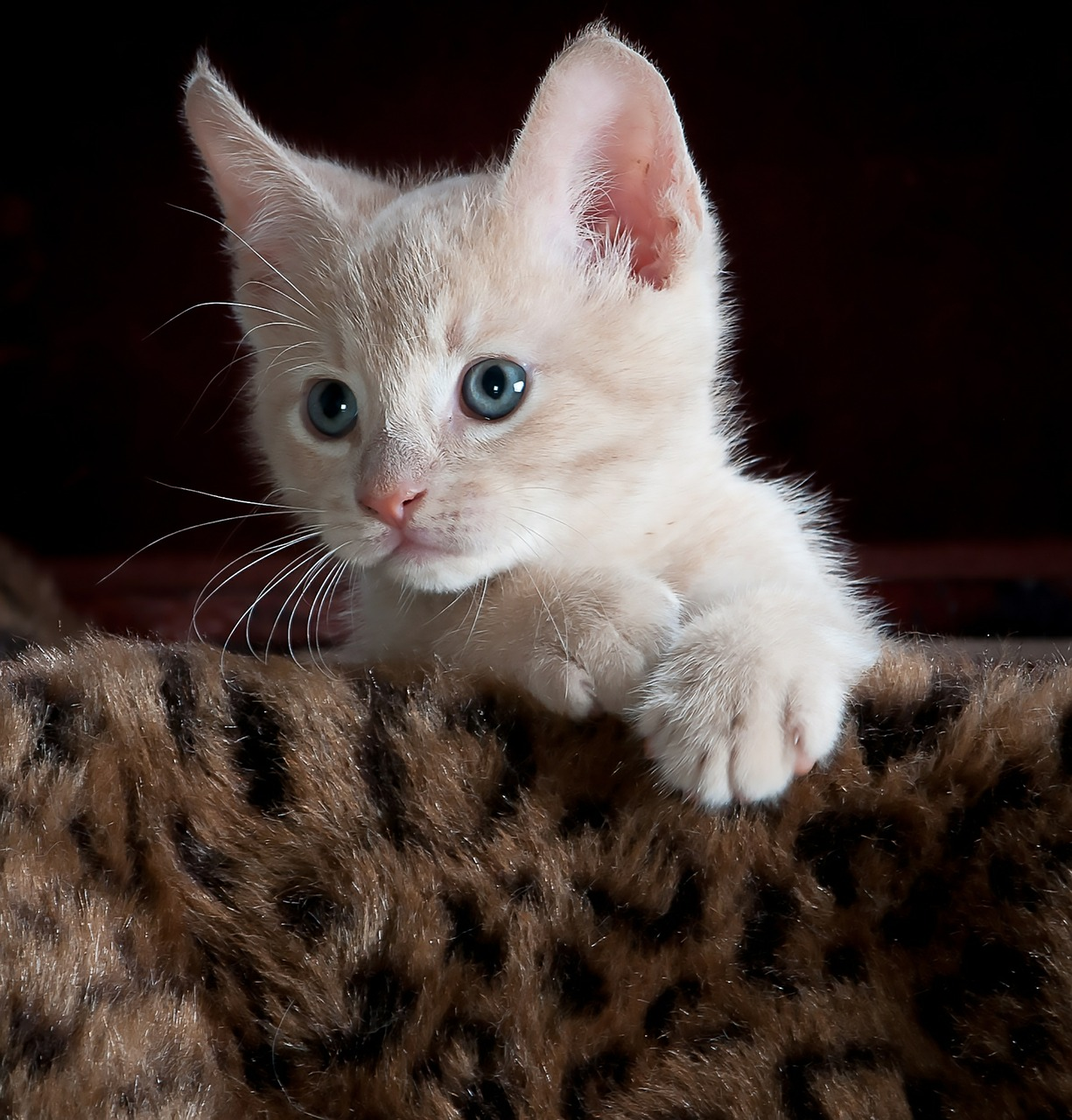 Gambar kucing boring
