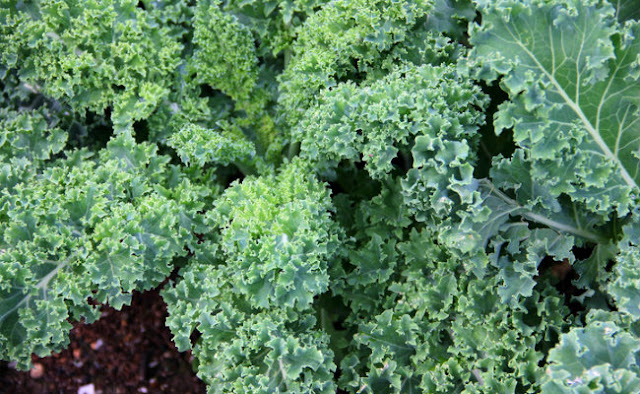 Help Your Brain and Memory by Growing These Magic Plants in Your Garden 60