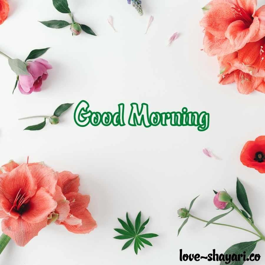flowers morning images