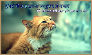 Love Shayri,लव शायरी,Images