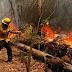Autoridades coordinan trabajos preventivos por incendios forestales en la Región del Maule