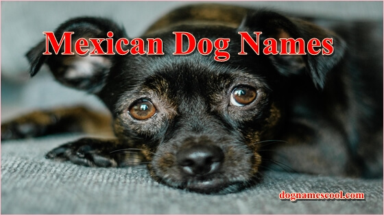 Mexican Dog Names