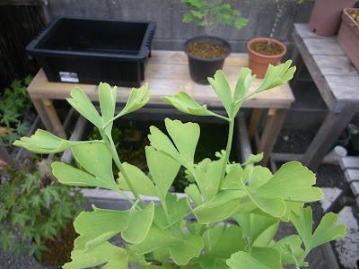 緑色の茎 先端