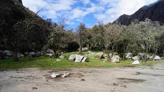 bosque, laguna, jatuncocha, valle santa cruz, peru, huascaran