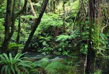 """Pertanyaan studi lingkup tersebut contohnya misalnya: """"faktor-faktor apa saja yang mempengaruhi keragaman spesies yang membentuk hutan?"""""""