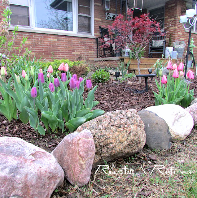Spring Garden Color with Tulips
