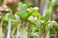 cara bisnis bibit tanaman, usaha bibit tanaman, cara usaha bibit tanaman, bibit tanaman, bisnis bibit tanaman menguntungkan, usaha bibit tanaman laris, bibit tanaman, bibit, tanaman bibit