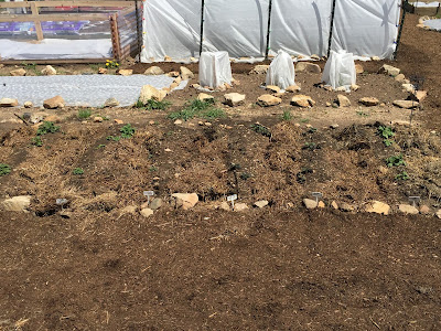 Community Gardening in the Mountains by Ginger Baer
