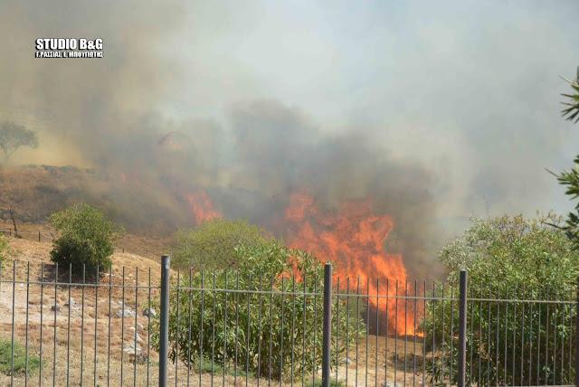 Σύλλογος Εκτάκτων Αρχαιολόγων: Πώς μεταδόθηκε η φωτιά εντός των τειχών της αποψιλωμένης μυκηναϊκής ακρόπολης;