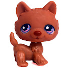 Littlest Pet Shop Large Playset Husky (#39) Pet