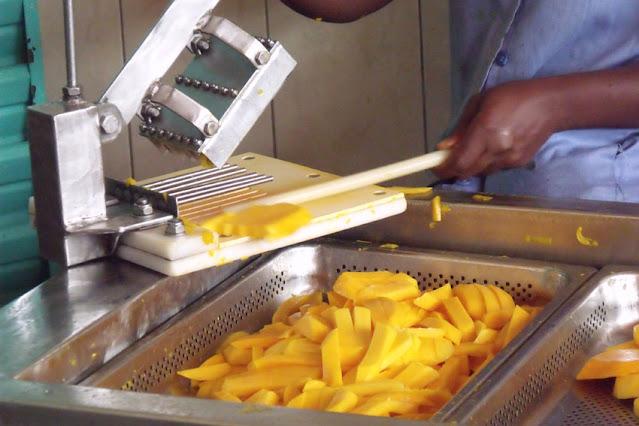 agriculture, production, mangue, casamance, exportation, marché, variété, fruit, confiture, jus, LEUKSENEGAL, Dakar, Sénégal, Afrique
