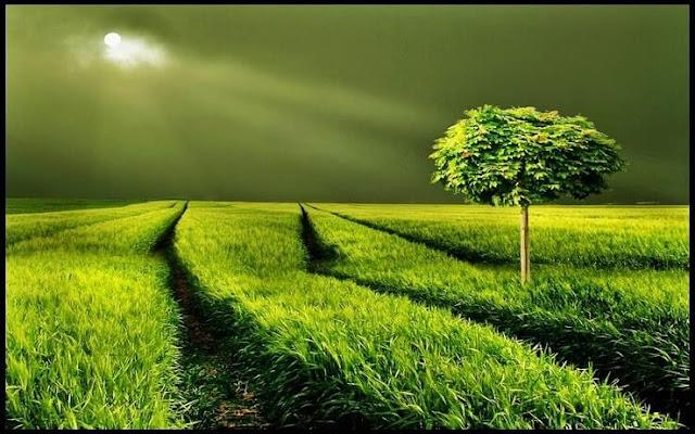 Renklerin Enerjisi- 6 Müthiş Rengin Bize Kattığı Harika Enerji Etkisi - Yeşil - Kurgu Gücü