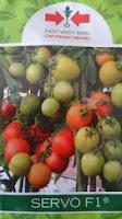 tomat servo, benih panah merah, buah tomat besar, menanam tomat, jual benih tomta, toko pertanian, toko online, lmga agro