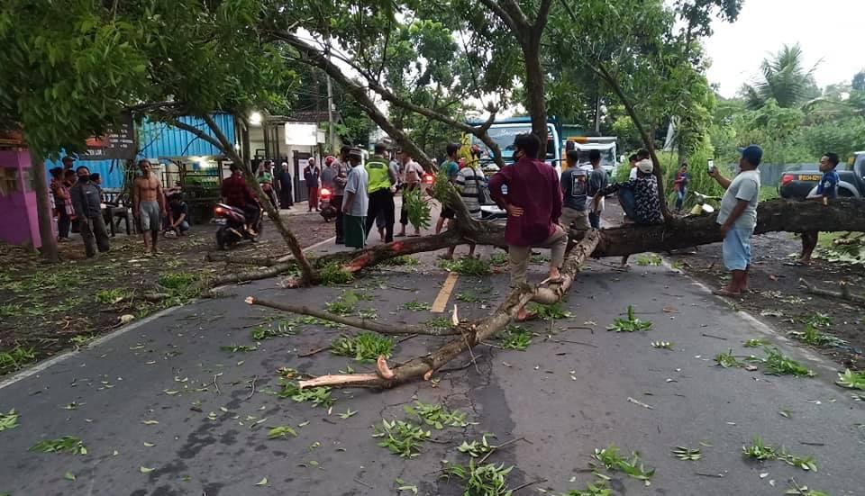 Pohon Tumbang di Desa Besuk, Timpa Kendaraan dan Ganggu Lalu Lintas
