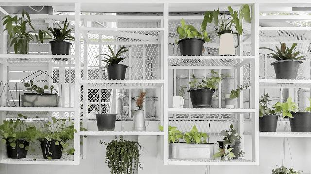 Agar-Makin-Adem-Yuk-Intip-3-Inspirasi-Kebun-Indoor-yang-Layak-Dicoba