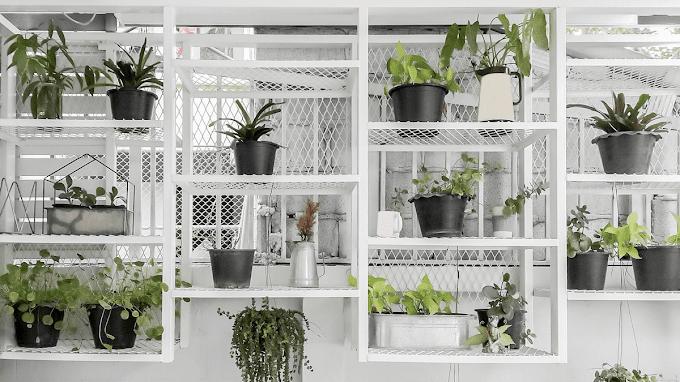 Agar Makin Adem, Yuk Intip 3 Inspirasi Kebun Indoor yang Layak Dicoba